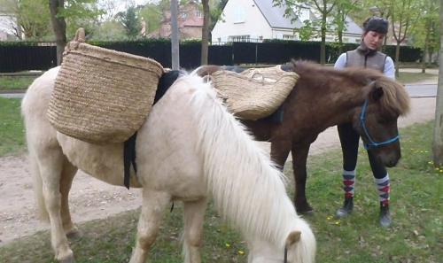 Photo chevaux 1 oct 2016.jpg