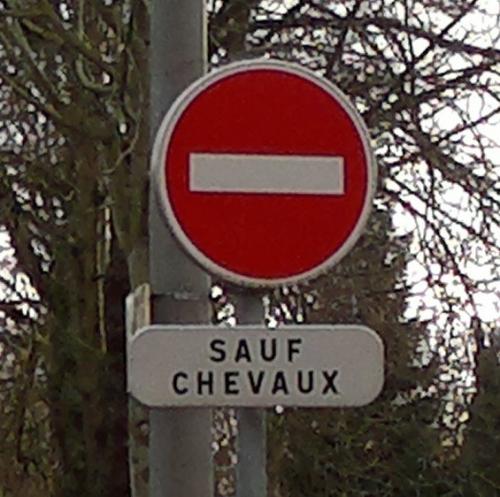 DSC Chevaux zoom.jpg